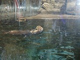 Sea Otter House